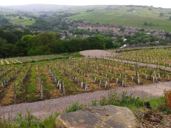 Holmfirth Vineyard: Vineyard from the car park