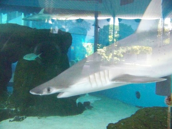 Mote Marine Laboratory and Aquarium: shark tank