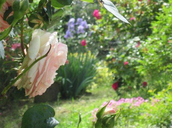 B&B A Casa di Lizzy: Le nostre rose