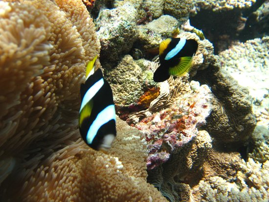LUX* South Ari Atoll: snorkelling on house reef