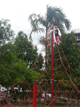 Muddy's Playground: my monkeys climbed to the top