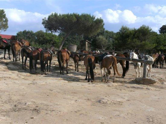 Rancho Grande Park: de paarden staan rustig te wachten voor de volgende tocht