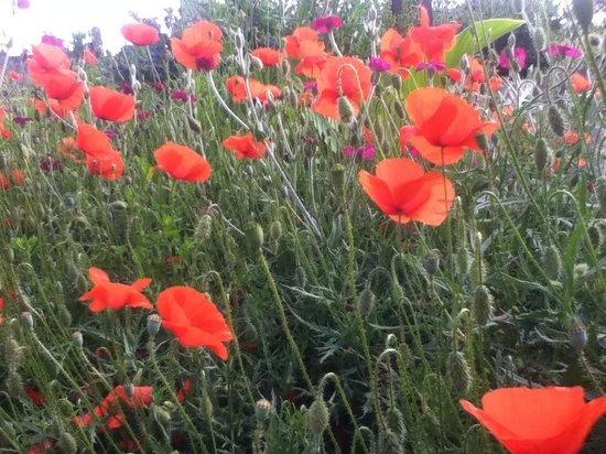 Maisons La Boissiere : Poppies for D-Day