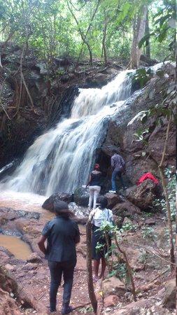 Karura Forest: wow