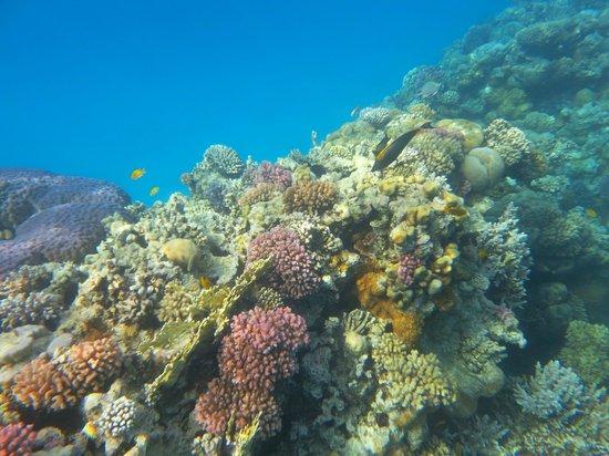 SENTIDO Reef Oasis Senses Resort : The reef accessed from the beach or pontoon.