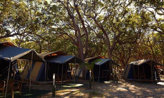 Cathedrals Fraser Island