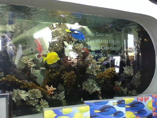 Cute Little Fish Tank In Art Shop - Picture of Brighton Beach ...