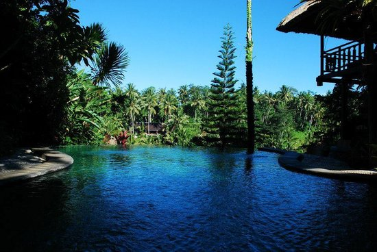 Graha Moding Villas : swimmingpool