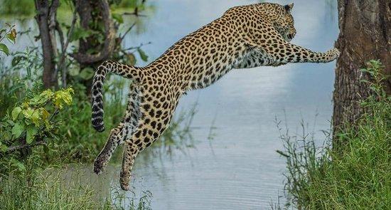 Wilderness Safaris Vumbura Plains Camp: wildlife