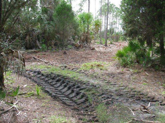 Withlacoochee Gulf Preserve : newly cleared area next to trail