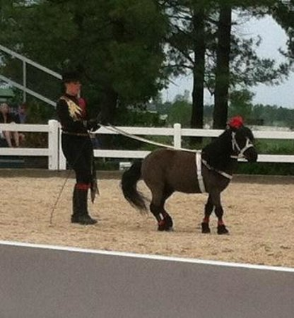 Kentucky Horse Park : The miniature horse