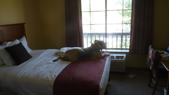MCM Elegante Lodge & Resort: Travelin' Jack LOVES a room with a view!  And every Lodge at Sierra Blanca room has amazing view
