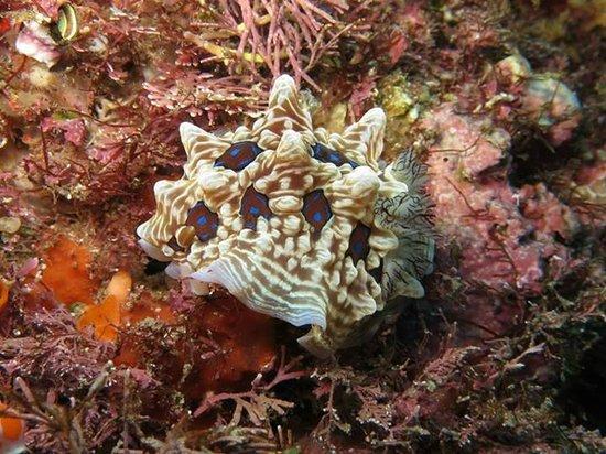 Dive Tutukaka: Nudibranch