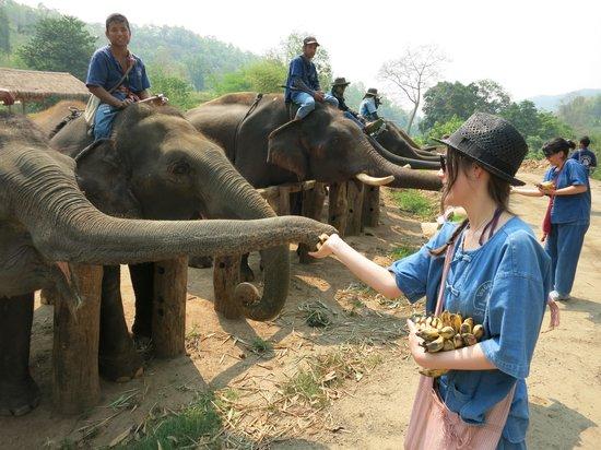 Thai Elephant Home: Feeding