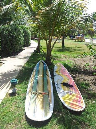Zed's Surfing Adventures: Boards