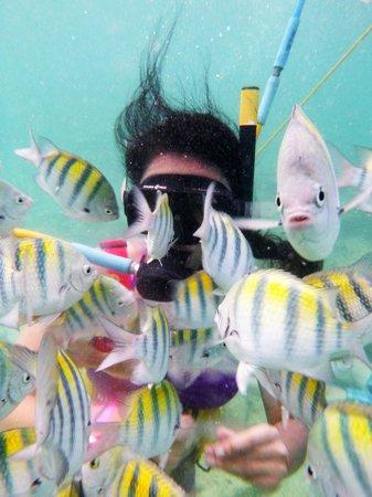 Ocean Adventures Bavaro Splash : Lovely!