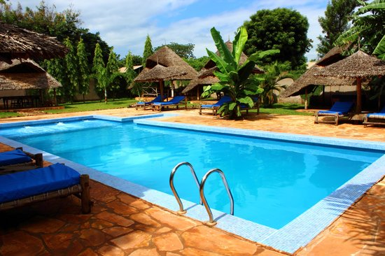 Honey Badger Lodge: View of pool area on a lazy afternoon