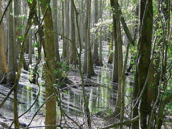 Great Dismal Swamp National Wildlife Refuge: swamp