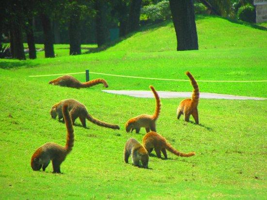 Hotel Riu Lupita: campo de golf