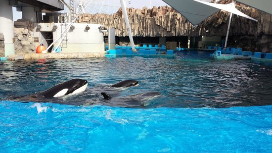 killer whale out of water - Picture of Port of Nagoya Public Aquarium, Nagoya...