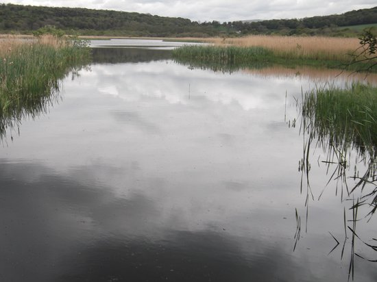 RSPB Leighton Moss Nature Reserve: A telescope would be handy