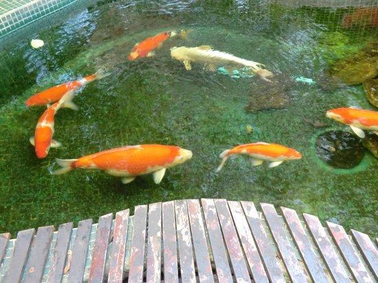 Pantip Suites Sathorn: Koi in the garden pond