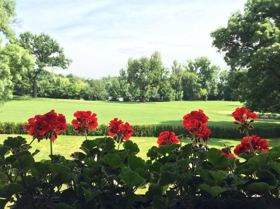 Diplomat: View from the porch