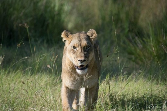 Little Kwara: Returning to the seen of the giraffe kill