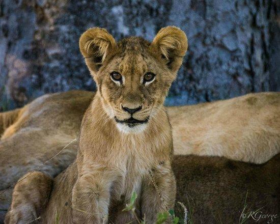 Little Kwara: Cubby