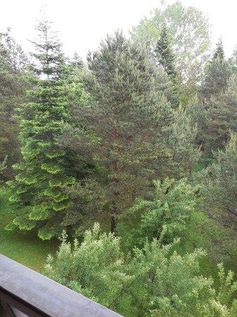 Koru Hotel: pine trees