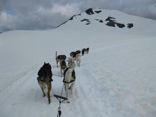 Salmon Berry Travel & Tours: Dog Sledding on the Glacier
