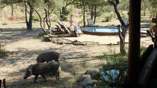 Shindzela Tented Camp: In camp