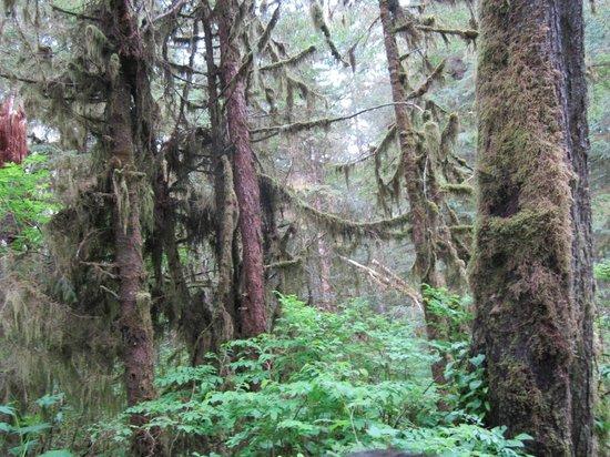 Alaska Rainforest Sanctuary: Rainforest Sanctuary