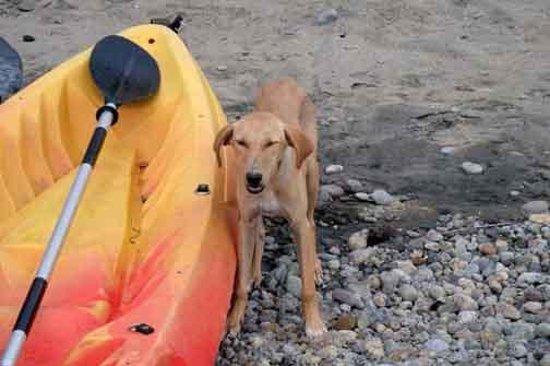 Ti Kaye Resort & Spa: Friendly little island dog