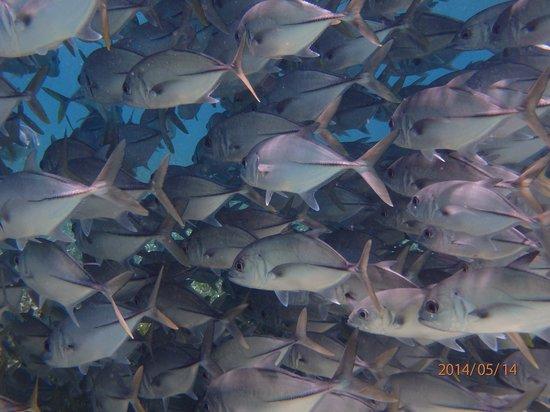 Belize Pro Dive Center: Lots of fish