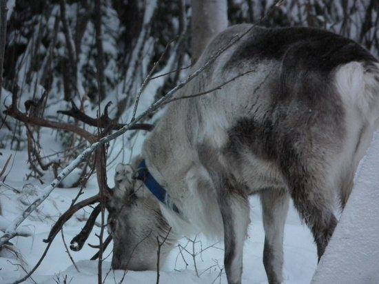 Lapland Safaris 2
