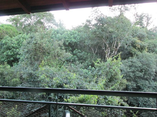 Iguazu Jungle Lodge : vista saludable
