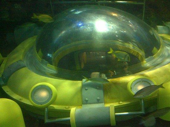 Ripley's Aquarium Of Canada: Ripley's Aquarium Toronto