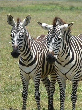 Ngorongoro Sopa Lodge: Twins