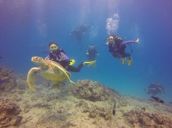 Oahu Diving: Tutle encounter