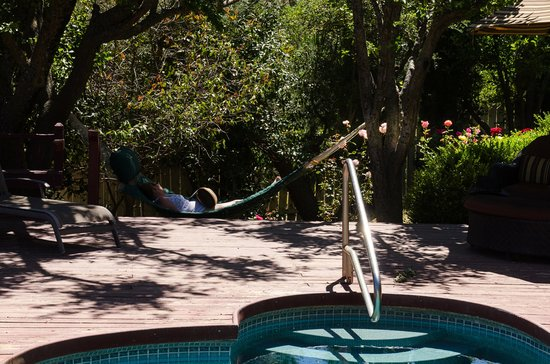 Eaglenest Bed and Breakfast : Nap time on the hammock amid the roses