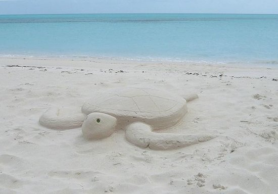 Shannas Cove Resort : Sand turtle expertly crafted by a fellow guest