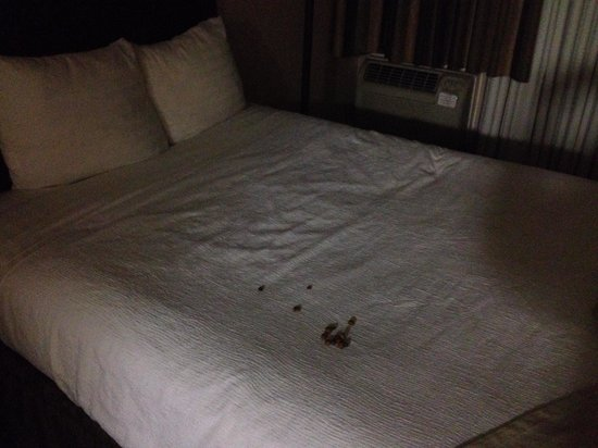 Radisson Hotel Louisville North : Not clean