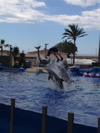 Marineland Majorca: Come on Dolphin's, you can do it! PUSH!