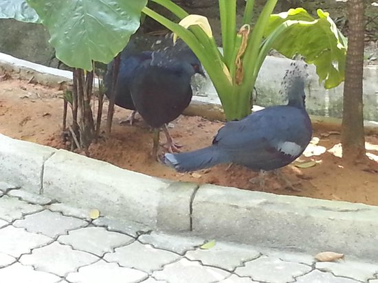 Sunway Lagoon : bird in small zoo