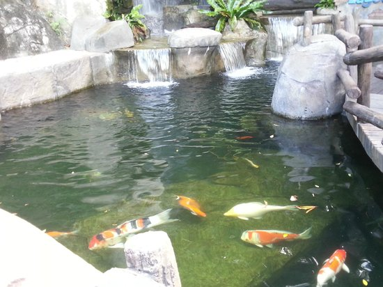 Sunway Lagoon : fish in the park