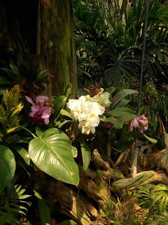 Reptile Gardens: Orchids inside the Dome