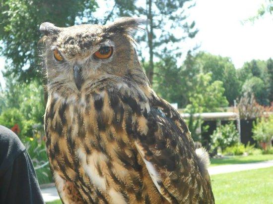 Reptile Gardens: Owl at the Bird Show