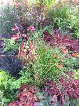Hollybeck Nurseries: Our Award Winning Show Garden Harrogate Autumn 2013