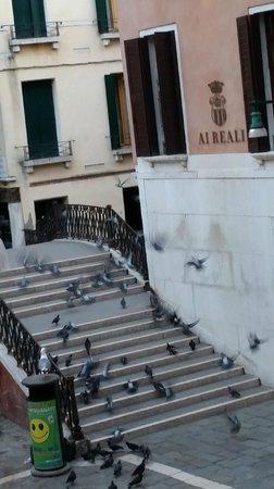 Hotel alla Fava: The birds outside our window
